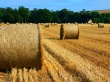 Northumberland Countryside