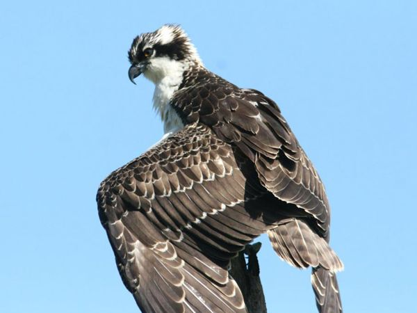 Family Osprey Day in Kielder Water & Forest Park