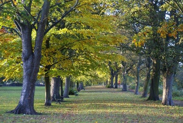 Inside Tyne Green Country Park