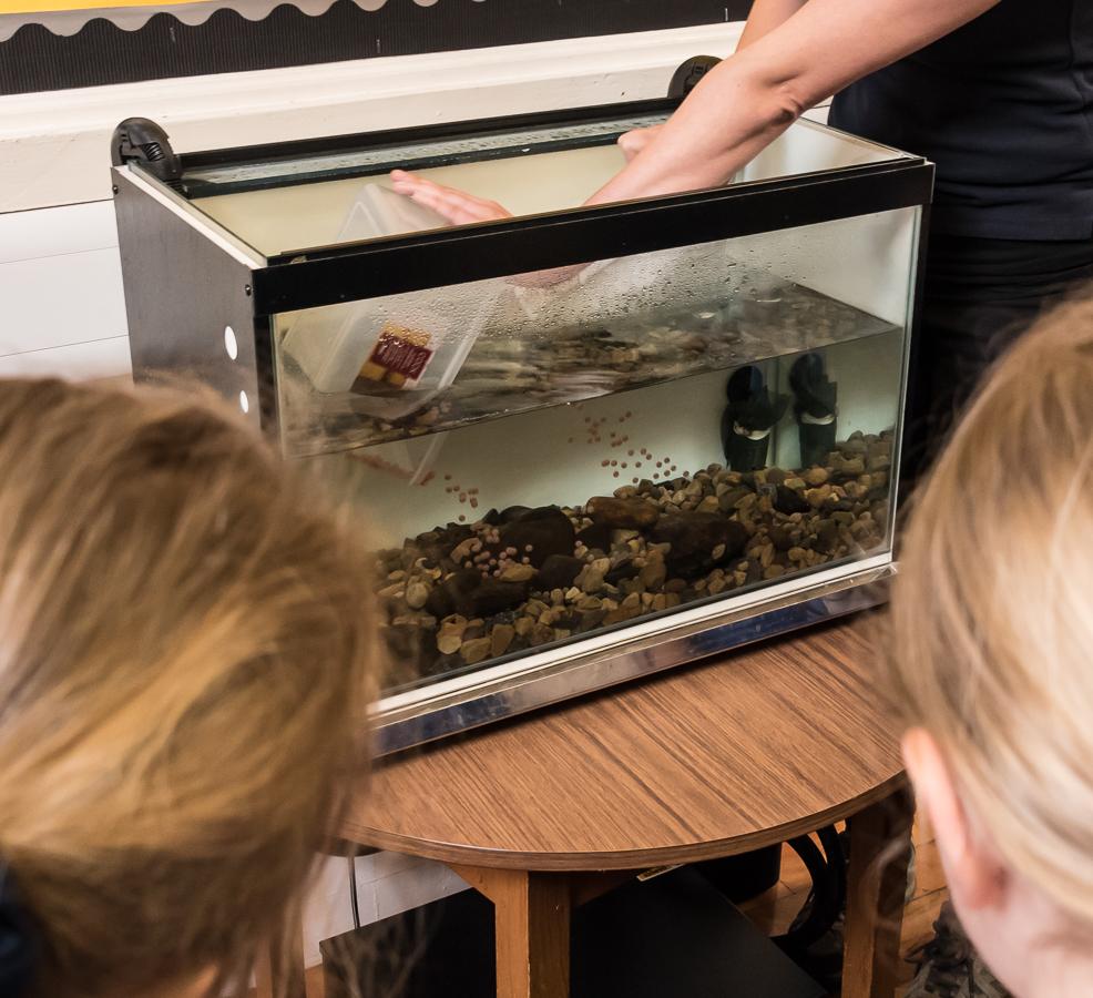 Salmon in class