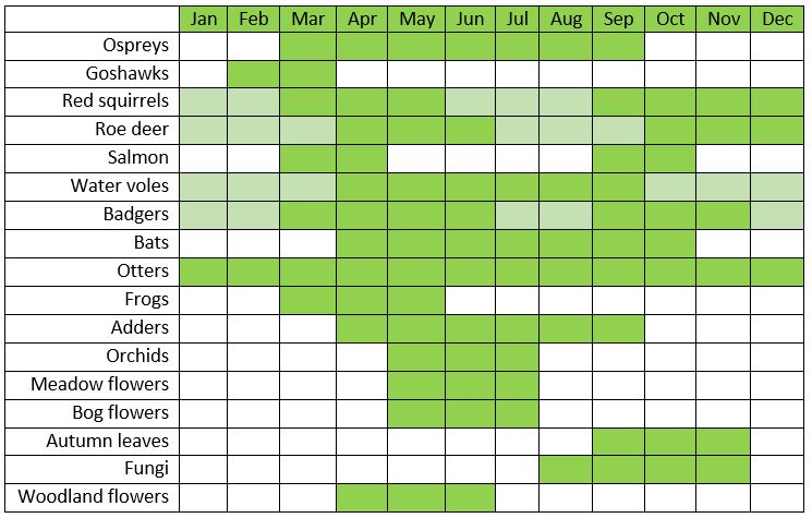 Table showing which months you are most likely to see different species at Kielder