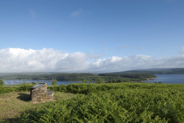 Branch out and discover Kielder
