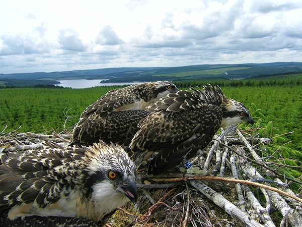 £330K boost to wildlife experience at Kielder