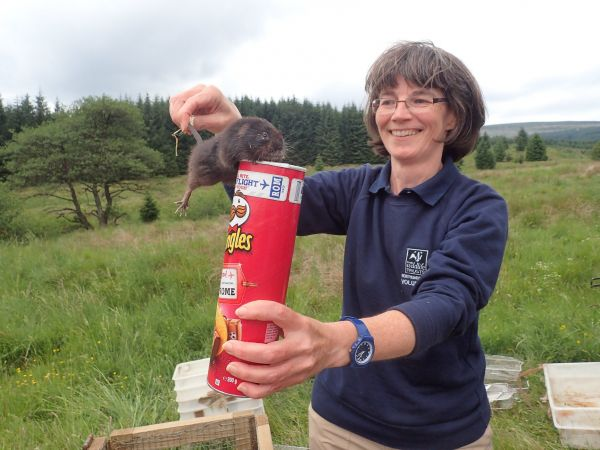 Third Kielder water vole release a great success