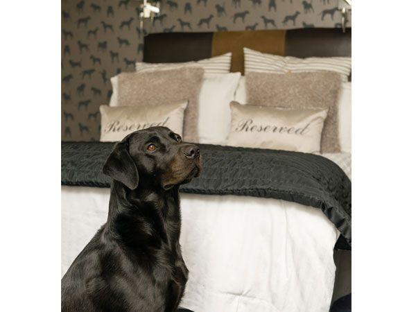 Dog Friendly Room