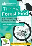 Big Forest Find at Kielder Castle