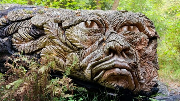 Discover Douglas on the way to the Pinetum