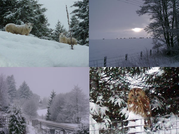 Snowy Eals Lodge