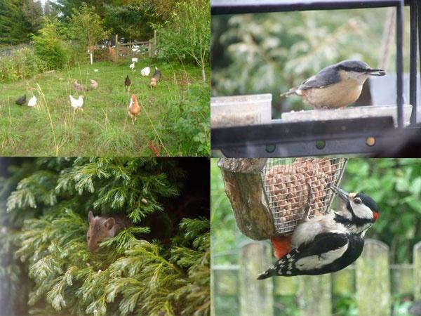 Wildlife at Eals Lodge