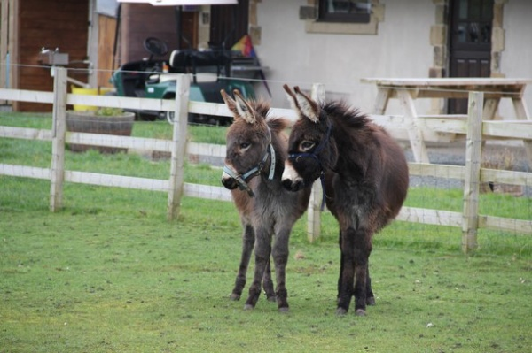 Our Donkeys - Coco & Barney