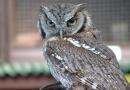 Owl at Kielder Water Birds of Prey Centre