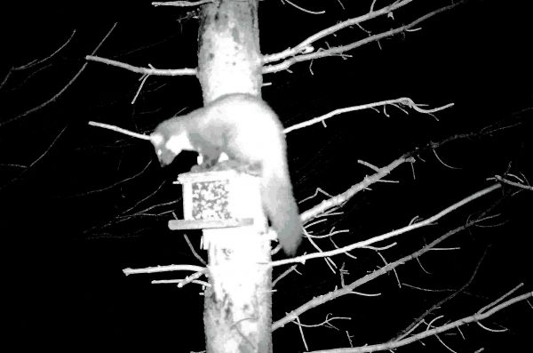 Pine Marten Survey Training