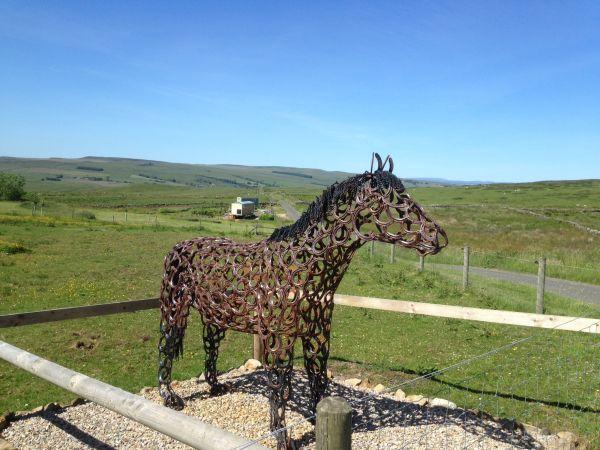 Maisie the butelandstop horse
