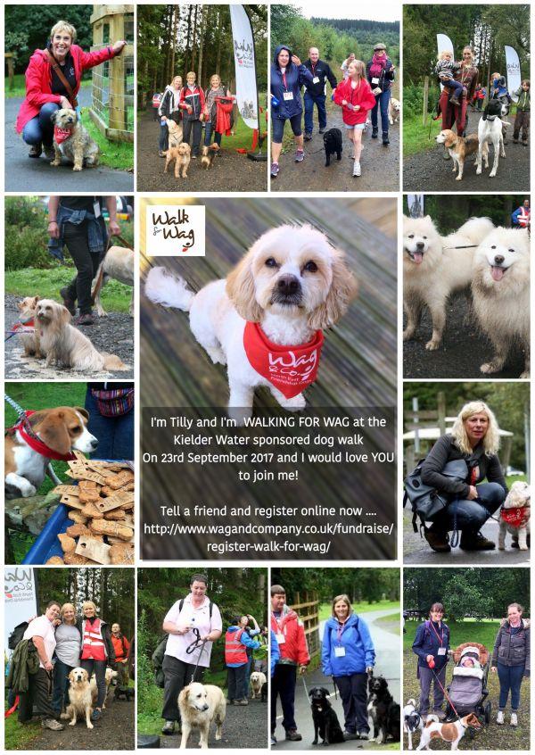 The Kielder Dog Walk,