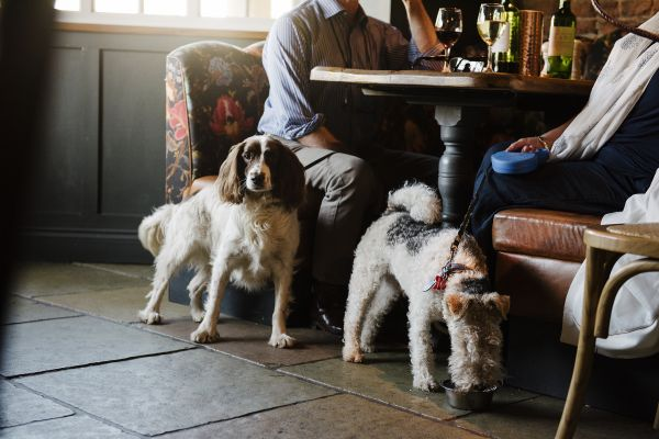 Dogs at William de Percy