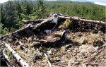 Ospreys not shell-shocked by fling