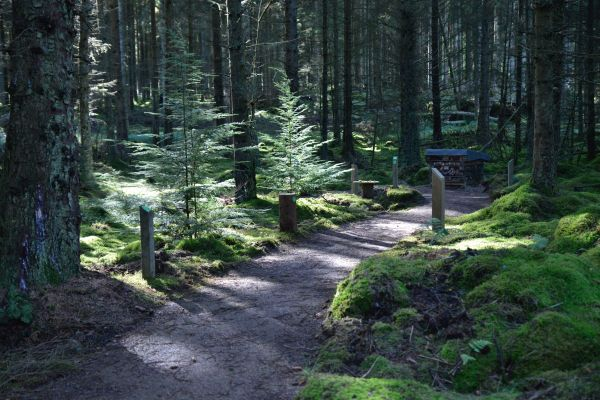 New winter wild walks for all the family to enjoy at Kielder!