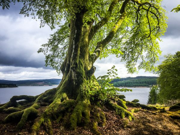 Planned reopening schedule for Kielder Water & Forest Park