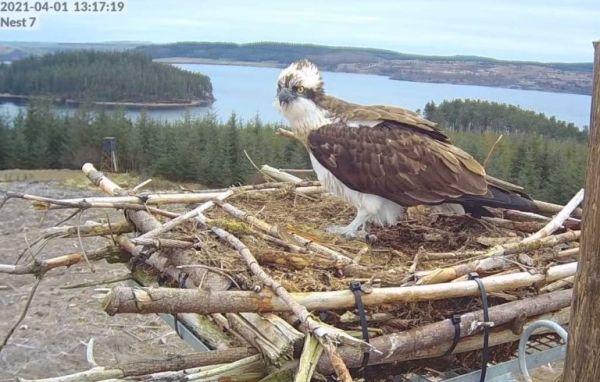 Feathered visitors' return to Kielder